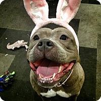 Adopt A Pet :: Wilma Goofus - Los Angeles, CA