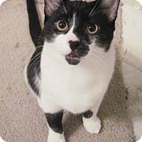 Adopt A Pet :: Rambo - Houston, TX