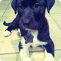 Adopt A Pet :: Zoe (Aka Gremlin) - Kyle, TX