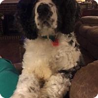 Adopt A Pet :: Walt - Alpharetta, GA