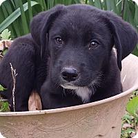 Adopt A Pet :: Nash - Preston, CT