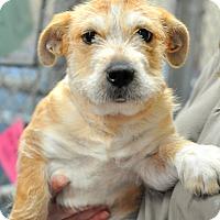 Adopt A Pet :: Nadean - Gadsden, AL