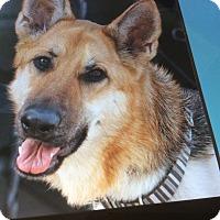 Adopt A Pet :: MONIQUE VON MAGDA - Los Angeles, CA