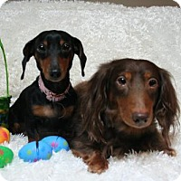 Adopt A Pet :: Carsten and Emma - Sioux Falls, SD