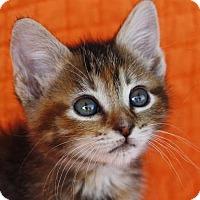 Adopt A Pet :: Janet - Little Rock, AR