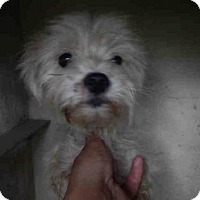 Adopt A Pet :: A383425 - San Antonio, TX