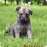 Adopt A Pet :: Brantley - New Oxford, PA