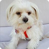 Adopt A Pet :: Gatsby - Thousand Oaks, CA