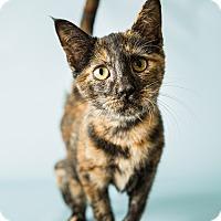 Adopt A Pet :: Ella - Hendersonville, NC