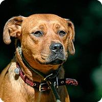 Adopt A Pet :: Carmina - Pottsville, PA