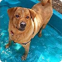 Adopt A Pet :: Copper - Charlottesville, VA