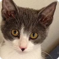 Adopt A Pet :: Lola - Newtown Square, PA