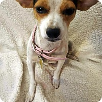 Adopt A Pet :: Chips - Salt Lake City, UT