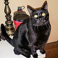 Adopt A Pet :: Macy's Spunky - White Settlement, TX