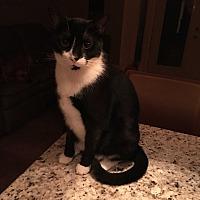 Adopt A Pet :: Jerry - Lauderhill, FL