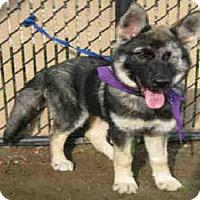 Adopt A Pet :: *MERCY - Norco, CA