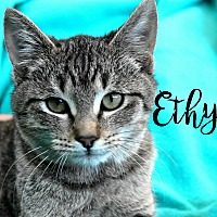 Adopt A Pet :: Ethyl - Wichita Falls, TX