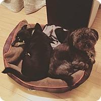 Adopt A Pet :: Munkii - sylmar, CA