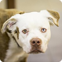 Adopt A Pet :: Falcor - Kettering, OH