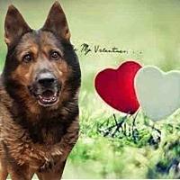 Adopt A Pet :: CISCO - Fairfield, CA