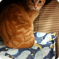 Adopt A Pet :: Archie - THORNHILL, ON