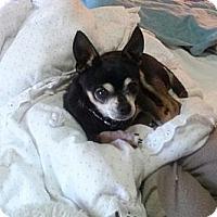 Adopt A Pet :: Murphy - Poulsob, WA