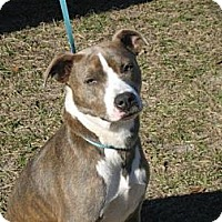 Adopt A Pet :: Isabella - Williston, FL