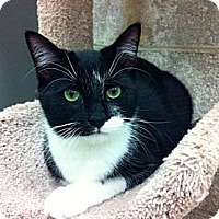Adopt A Pet :: Lane - Warminster, PA