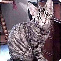 Adopt A Pet :: Tess - Portland, OR