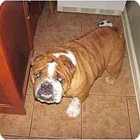 Adopt A Pet :: Bruce - San Diego, CA