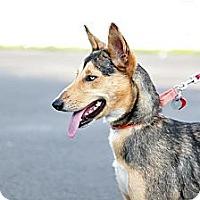 Adopt A Pet :: Dakota - Richmond, VA