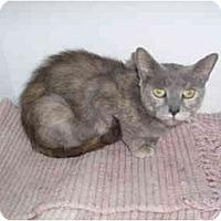 Adopt A Pet :: Pink Lavendar - Hamburg, NY