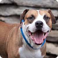Adopt A Pet :: Chance - Louisville, KY