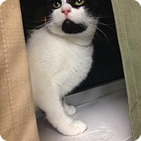 Adopt A Pet :: Alice - Trevose, PA