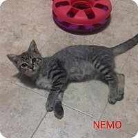 Adopt A Pet :: Nemo! - McDonough, GA