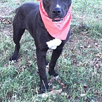 Terrier (Unknown Type, Small) Mix Dog for adoption in Comanche, Texas - Kody