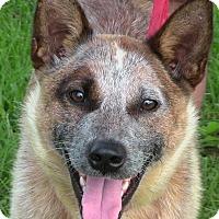Adopt A Pet :: Betty (Boo) - Texico, IL