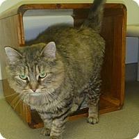 Adopt A Pet :: Francine - Hamburg, NY