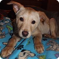 Adopt A Pet :: Henry - Mechanicsburg, PA