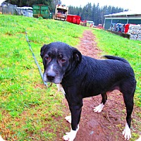 Adopt A Pet :: Ike - Tillamook, OR