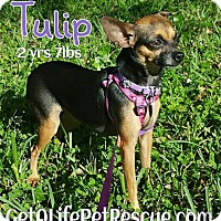 Adopt A Pet :: Tulip - Wellington, FL