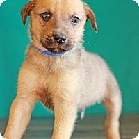 Adopt A Pet :: Wrangler - Waldorf, MD