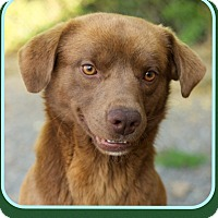 Adopt A Pet :: Spades (Pom-dc) - Allentown, PA