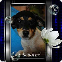 Adopt A Pet :: Scooter - Crowley, LA