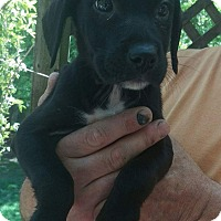 Adopt A Pet :: Piper - Charlestown, RI