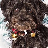 Adopt A Pet :: Figgy - Gilbert, AZ