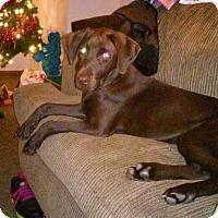 Adopt A Pet :: Scarlet - Columbus, OH