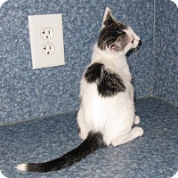 Adopt A Pet :: Rocky - Harrisburg, NC