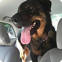 Adopt A Pet :: Andaro - Whitestone, NY