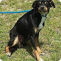 Adopt A Pet :: Durante - Carthage, NC